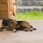 Despre câini şi (ne)oameni