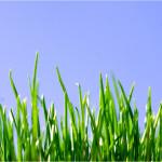 Luni nici iarba nu creste!