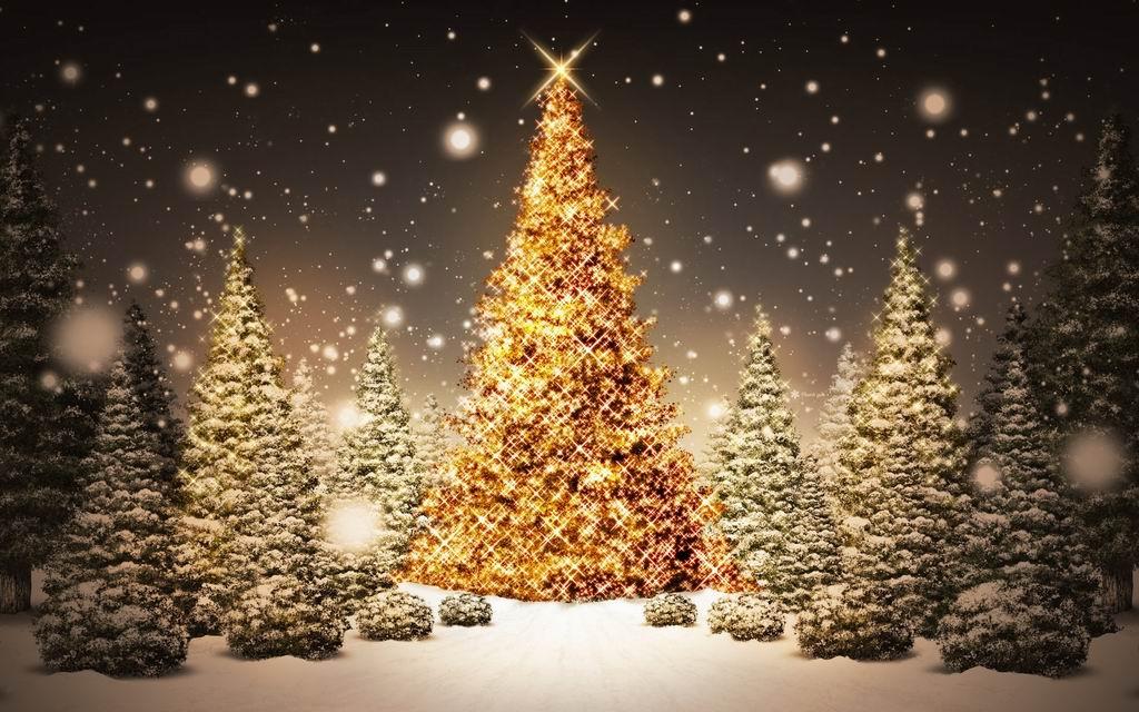 Bradul de Crăciun – a fi sau a nu fi eco
