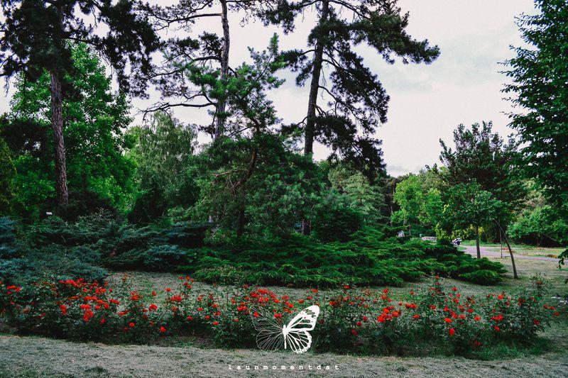 Launmomentdat în Parc, în Parcul Botanic din Timişoara